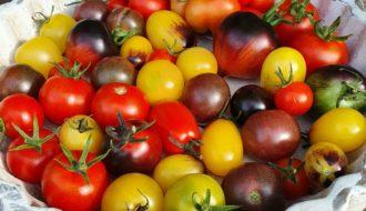 Tomaten alte Sorte